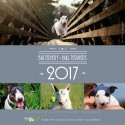 Kalendarz biurkowy z bulterierami 2017