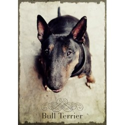 Plakat - Bulterier czarny