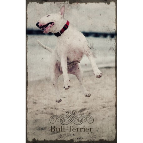 Plakat - Bulterier biały