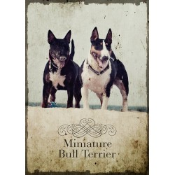 Plakat - Bulterier miniaturowy