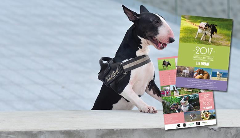 Calendar Bull Terriers 2017