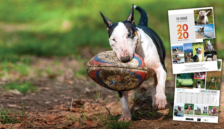Calendar Bull Terriers 2020